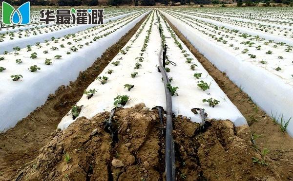 滴灌系统成本组成